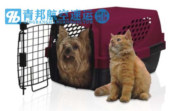 宠物航空托运方式,宠物空运有两种