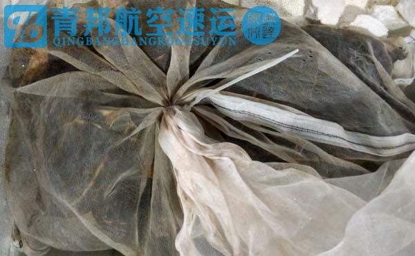 杭州到广州宠物龟航空托运青邦航空速运公司100%服务